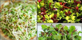 Καλλιεργούμε φύτρα