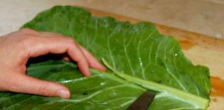 φύλλα λάχανου ασθένειες